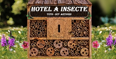 Hotel A Insecte 395 200