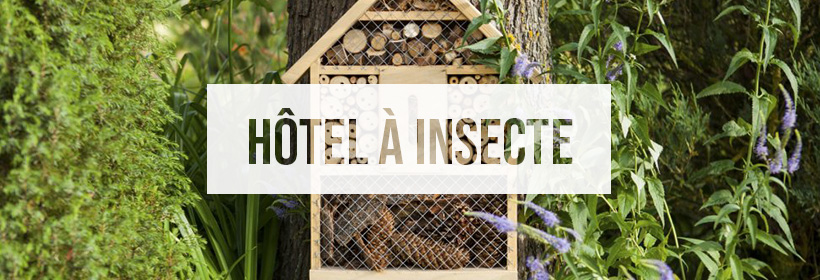 Hotel A Insecte