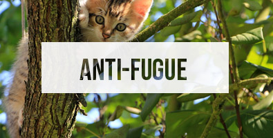 dispositifs anti-fugue pour chat